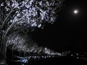 LED_384_sakura1